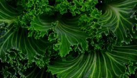 Green Leafy Veggies
