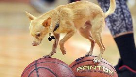 NBA Playoffs Round 1: Boston Celtics Vs Chicago Bulls At United Center