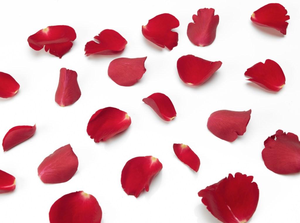 Studio Shot Of Rose Petals